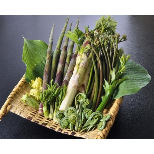 天然 山菜 山菜天ぷらセット500g 天ぷらが美味しい 春の味覚 山の幸 5,6種類を採りたて産地直送 天ぷらパーテイで食べ較べ okuaizushunsaikan-y
