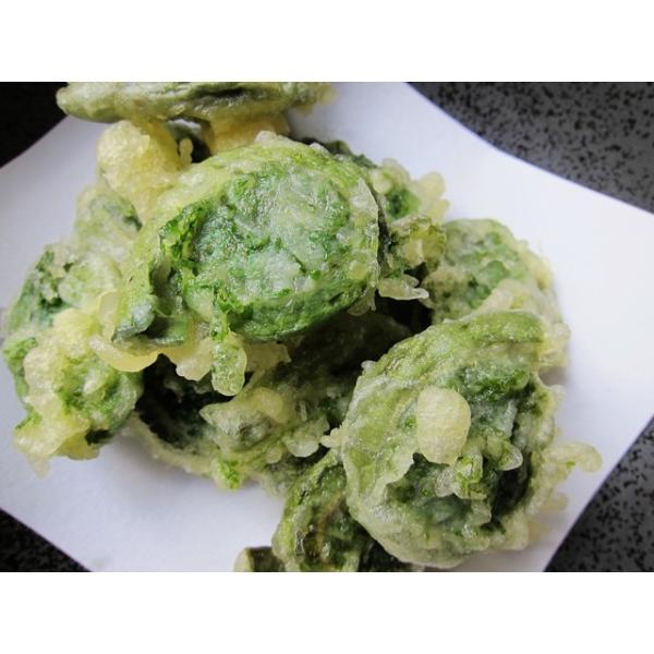 天然 山菜 山菜天ぷらセット500g 天ぷらが美味しい 春の味覚 山の幸 5,6種類を採りたて産地直送 天ぷらパーテイで食べ較べ okuaizushunsaikan-y 05