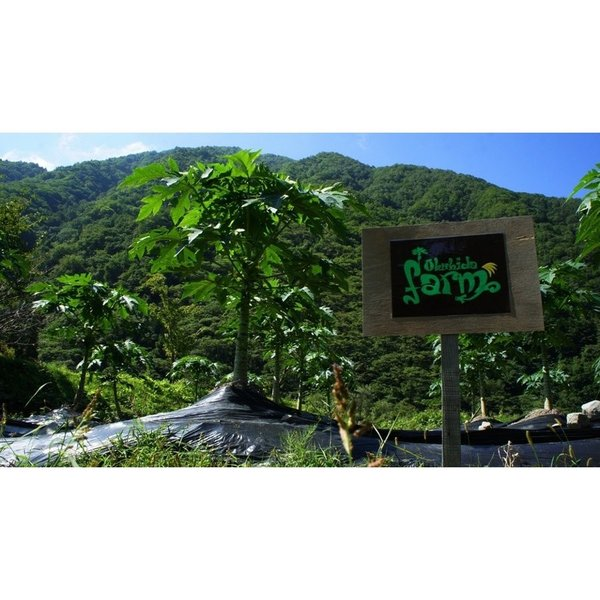 飛騨産のパパイヤ茶(パパイヤリーフ)50g okuhida-fram 03