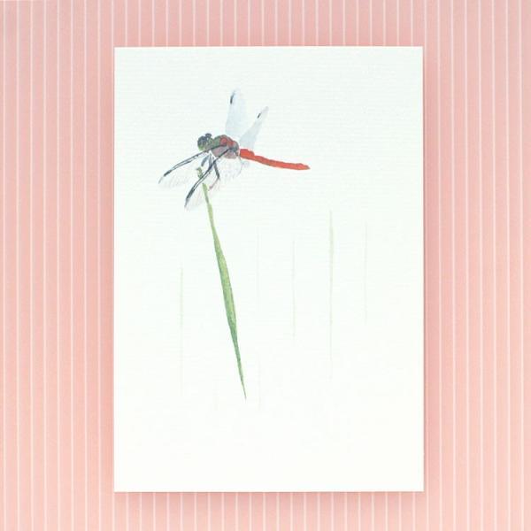 絵葉書 おしゃれ 和紙 季節の絵はがき 秋 とんぼ