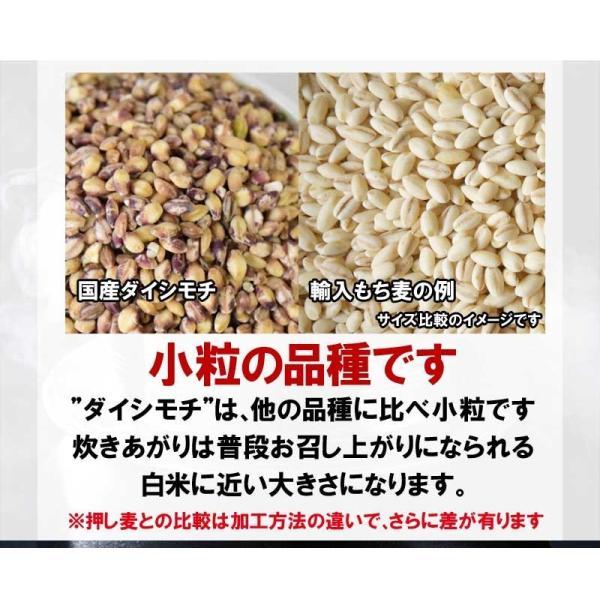 国産 もち麦 もちむぎ(ダイシモチ) 1kg 2017年度産 わけあり 訳あり βグルカン 送料無料|onomichi-marukin|09