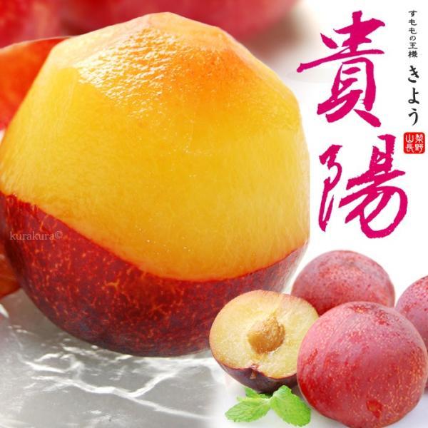 貴陽プラム(8-12玉/約1.8kg)山梨・長野産 国産すもも 送料無料