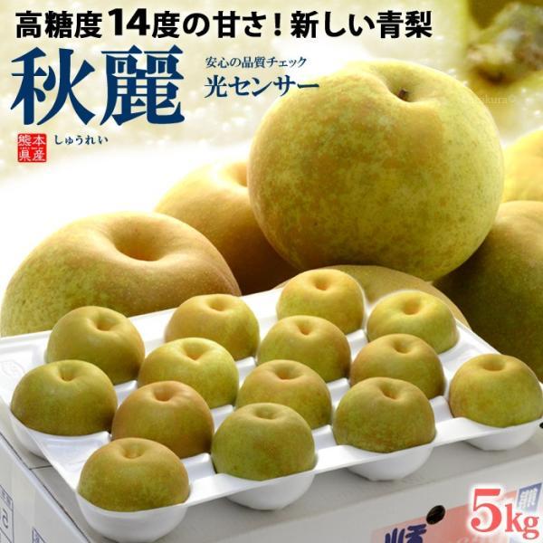 秋麗梨(12-14玉前後/5kg)熊本産 和梨 青梨 高糖度 甘い 送料無料