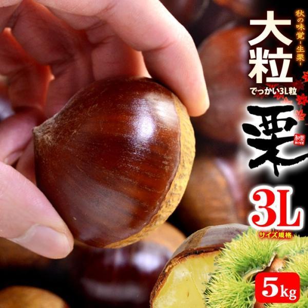 栗3L(約5kg)茨城・熊本・愛媛産 大粒 和栗 くり クリ 送料無料
