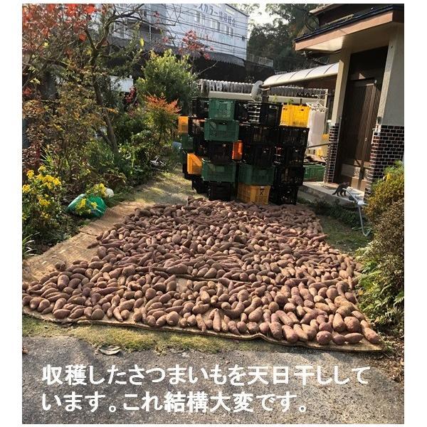 【増産100袋限定】この冷凍焼き芋で感動してください。こんな焼き芋食べたことない! あなたを笑顔&元気にする冷凍焼き芋(紅はるか)400g 家庭用  |oomugiya-isakoubou|19