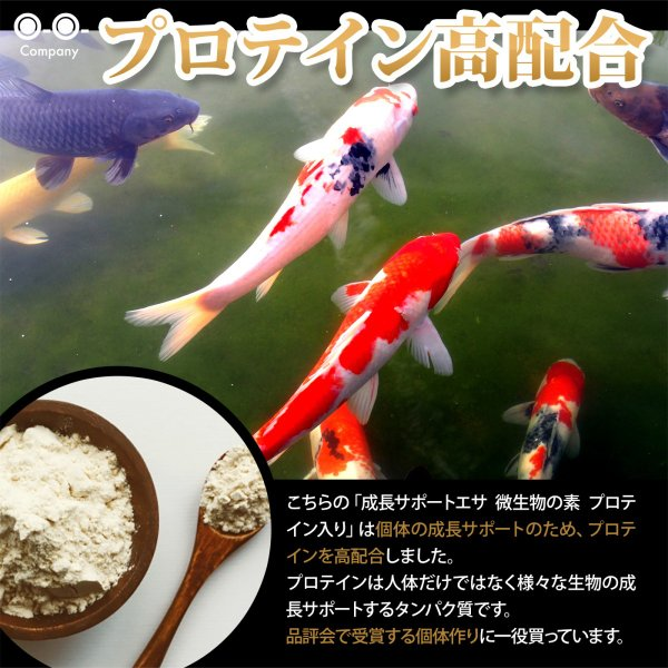 OーOー(オーオー)成長促進系エサ 微生物の素 プロテイン入り メダカ 稚魚(針子) 熱帯魚の餌|ooo|05