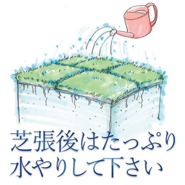 芝生 姫高麗芝 2平米 鹿児島産|oosumi|02