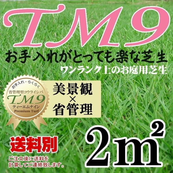 芝生 TM9 1平米 鹿児島産|oosumi