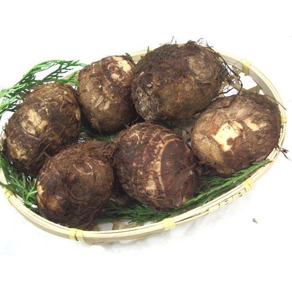 里芋(さといも)1kg 九州産・宮崎産・熊本産・大分産