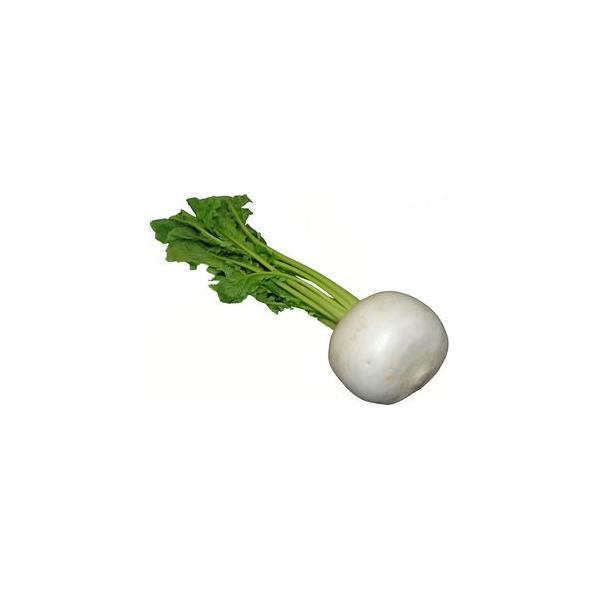 九州産 かぶ(カブ・蕪)  1玉 九州の安心・安全な野菜! 【福岡産・九州】
