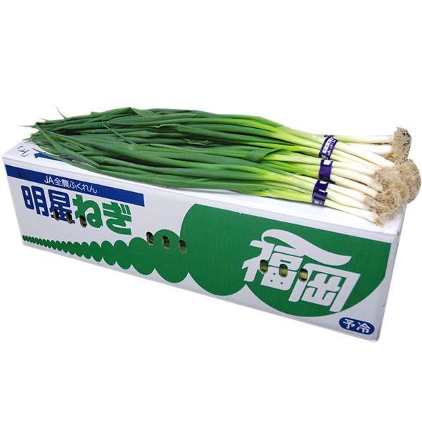 【箱売り】 大ねぎ(大葱・オオネギ) 1箱(約5kg) 福岡・国産 【業務用・大量販売】【RCP】