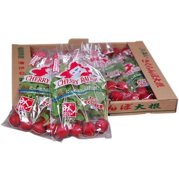 【箱売り】 ラディッシュ(さくらんぼ大根) 1箱(10袋入り) 九州・福岡産など 【業務用・大量販売】【RCP】