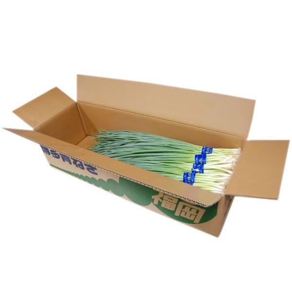【箱売り】 青ねぎ・中ねぎ 1箱(約3kg) 福岡産 【業務用・大量販売】【RCP】