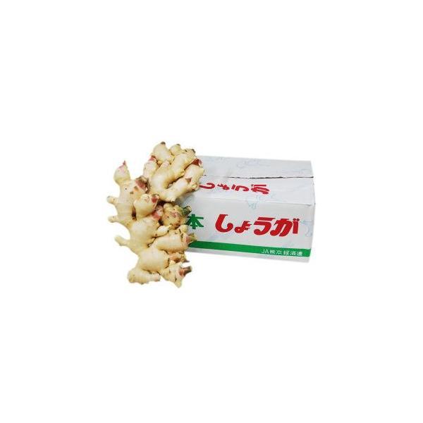 【箱売り】  新生姜(しょうが・ジンジャー) 1箱(約4kg) 国産 【業務用・大量販売】