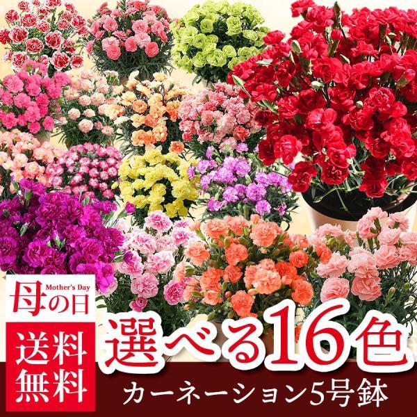 母の日 ギフト 早割 花 カーネーション 選べる16種類 5号 鉢植え 送料無料 プレゼント 花鉢 花束 珍しい 希少 綺麗 キレイ かわいい おしゃれ|organic