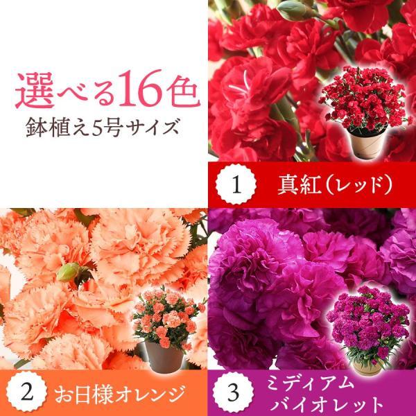 母の日 ギフト 早割 花 カーネーション 選べる16種類 5号 鉢植え 送料無料 プレゼント 花鉢 花束 珍しい 希少 綺麗 キレイ かわいい おしゃれ|organic|02