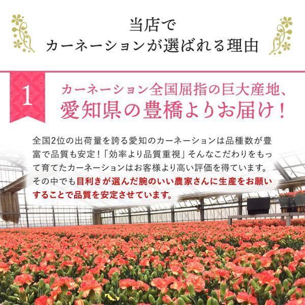 母の日 ギフト 早割 花 カーネーション 選べる16種類 5号 鉢植え 送料無料 プレゼント 花鉢 花束 珍しい 希少 綺麗 キレイ かわいい おしゃれ|organic|07