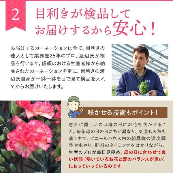 母の日 ギフト 早割 花 カーネーション 選べる16種類 5号 鉢植え 送料無料 プレゼント 花鉢 花束 珍しい 希少 綺麗 キレイ かわいい おしゃれ|organic|08