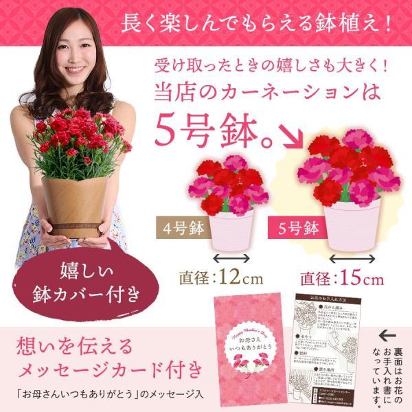 母の日 ギフト 早割 花 カーネーション 選べる16種類 5号 鉢植え 送料無料 プレゼント 花鉢 花束 珍しい 希少 綺麗 キレイ かわいい おしゃれ|organic|10