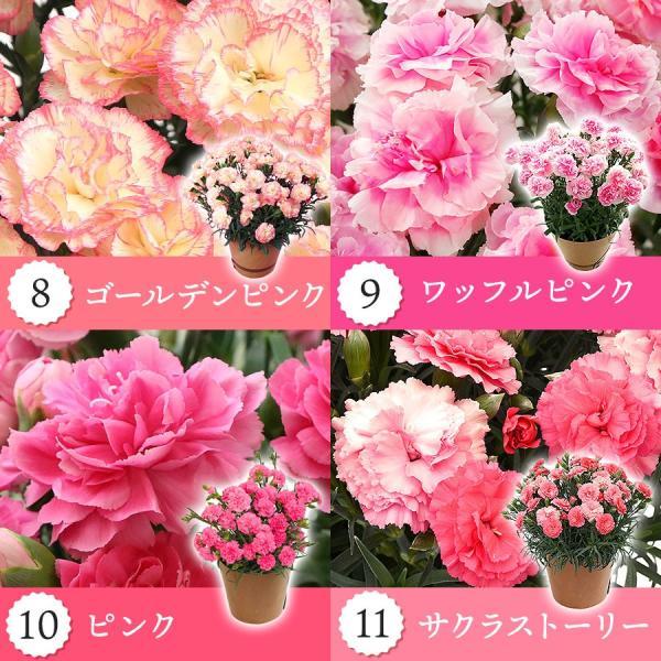 母の日 ギフト 早割 花 カーネーション 選べる16種類 5号 鉢植え 送料無料 プレゼント 花鉢 花束 珍しい 希少 綺麗 キレイ かわいい おしゃれ|organic|04