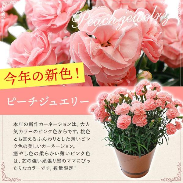 母の日 ギフト 早割 花 カーネーション 選べる16種類 5号 鉢植え 送料無料 プレゼント 花鉢 花束 珍しい 希少 綺麗 キレイ かわいい おしゃれ|organic|06