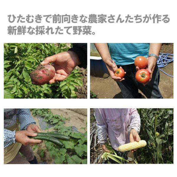 送料無料 野菜セット 岩沼みんなの家のみんなの直売!野菜|organic|05