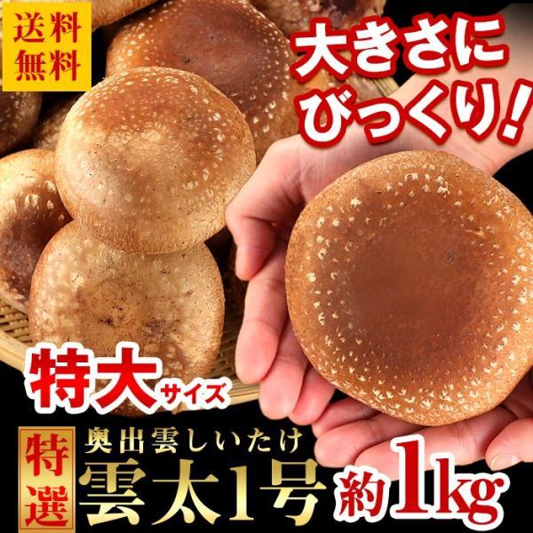 送料無料 島根県産 しいたけ 特大サイズ 奥出雲しいたけ 雲太1号 約1kg 椎茸 シイタケ|organic