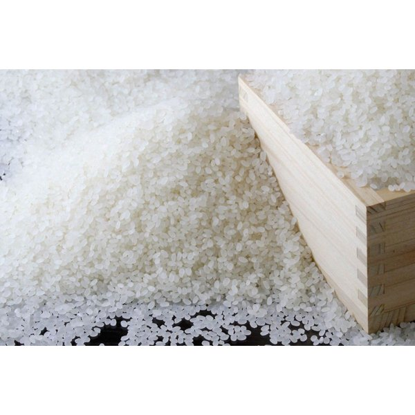 新米 お米20kg 平成30年度 新米コシヒカリ 滋賀県産  蛍の里の条抜き米|orite|02