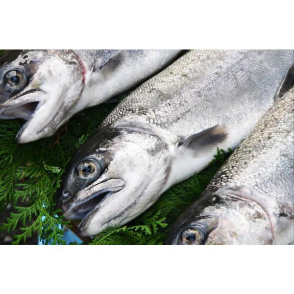 ご当地 サーモン ビワマス びわますの水煮缶 養殖 鱒|orite|03