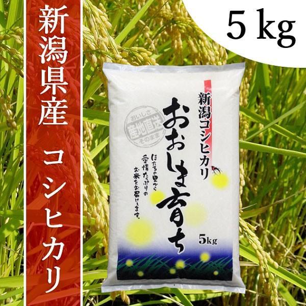 産地直送 新潟県産 令和2年産 おおしま育ち コシヒカリ 5kg 白米|oshima-sodachi