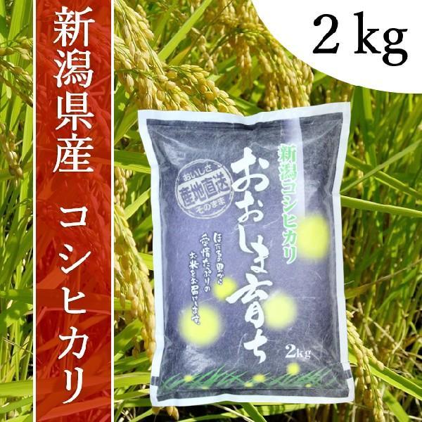 産地直送 新潟県産 令和2年産 おおしま育ち コシヒカリ 2.0kg 白米|oshima-sodachi