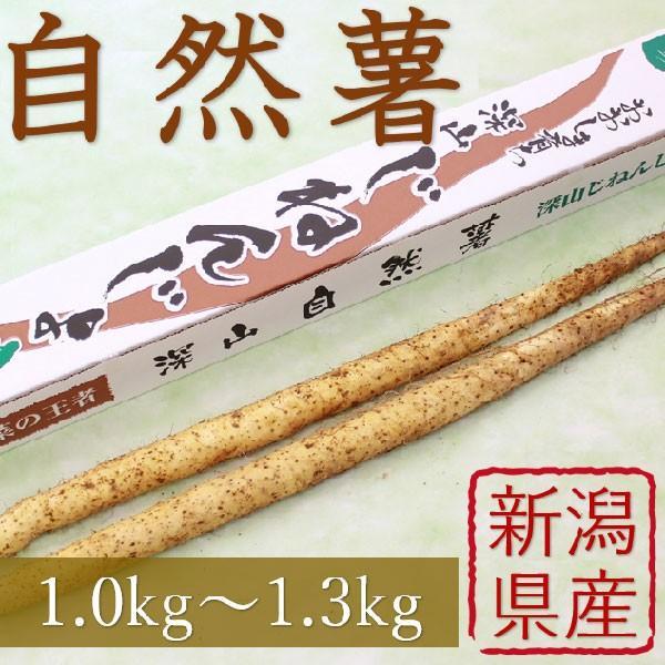 産地直送 新潟県産 令和2年産 おおしま育ち 深山自然薯2本(1.0kg〜1.3kg) 数量限定|oshima-sodachi