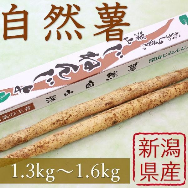 産地直送 新潟県産 令和2年産 おおしま育ち 深山自然薯2本(1.3kg〜1.6kg) 数量限定|oshima-sodachi
