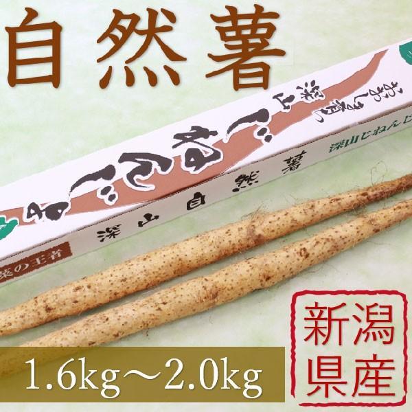 産地直送 新潟県産 令和元年産 おおしま育ち 深山自然薯2本(1.6kg〜2.0kg)|oshima-sodachi