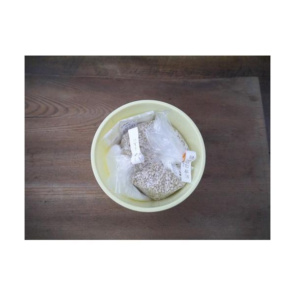 大麦塩麹 手作りキット 大麦麹(1Lポリ容器)