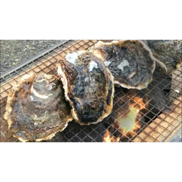 BBQ set    岩牡蠣 20個 (約3kg)   (牡蠣ナイフ、片手用軍手付)送料無料