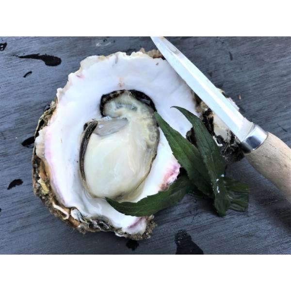 岩牡蠣 能登産 2 kg   (6〜8個)(牡蠣ナイフ、片手用軍手付) 送料無料 otasuisan 02