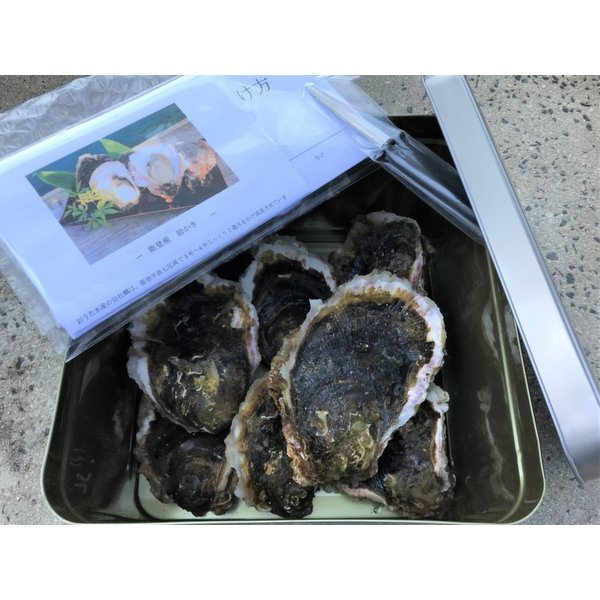 岩牡蠣 能登産 2 kg   (6〜8個)(牡蠣ナイフ、片手用軍手付) 送料無料 otasuisan 03