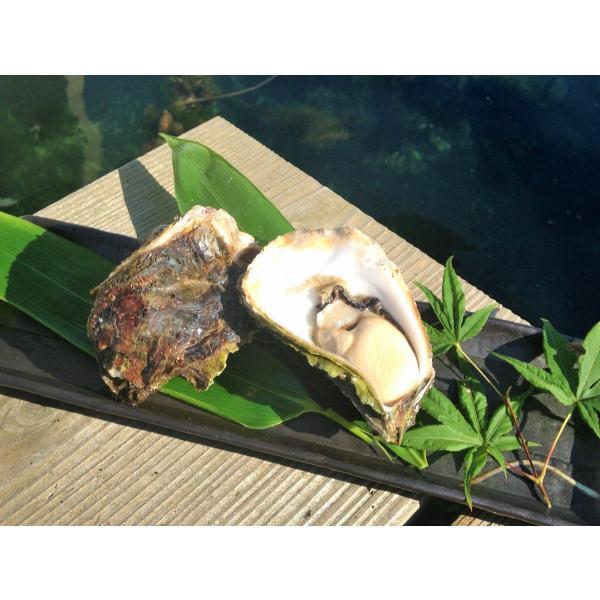 岩牡蠣 能登産 2 kg   (6〜8個)(牡蠣ナイフ、片手用軍手付) 送料無料 otasuisan 07