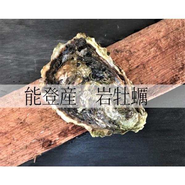 岩牡蠣 能登産 2 kg   (6〜8個)(牡蠣ナイフ、片手用軍手付) 送料無料 otasuisan 09