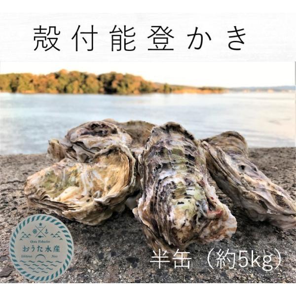能登かき 殻付(半缶  約40個)(牡蠣ナイフ、片手用軍手付)|otasuisan