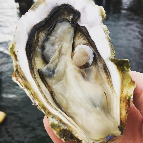 能登かき 殻付(半缶  約40個)(牡蠣ナイフ、片手用軍手付)|otasuisan|03