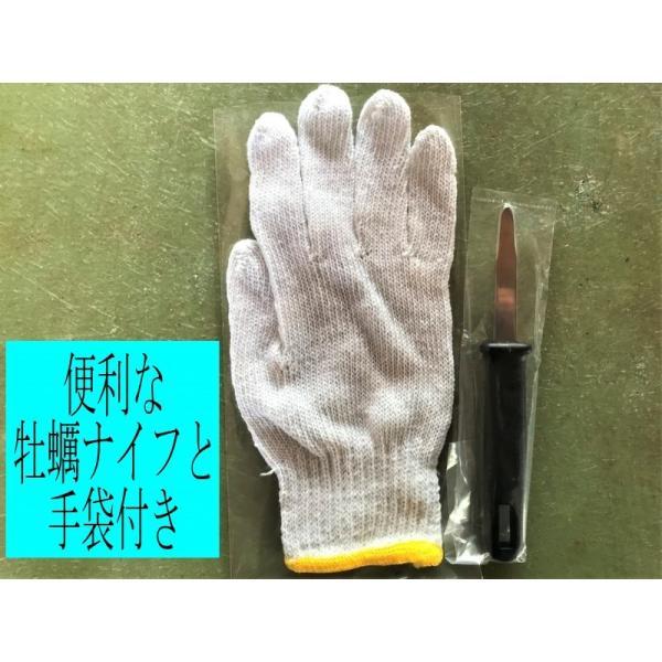 能登かき 殻付(半缶  約40個)(牡蠣ナイフ、片手用軍手付)|otasuisan|05