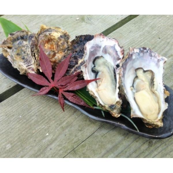 能登かき 殻付(半缶  約40個)(牡蠣ナイフ、片手用軍手付)|otasuisan|06