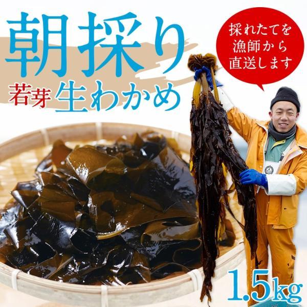 感動の生わかめ産直ギフト(約1.5kg)冷蔵 ◯|otr-ishinomaki
