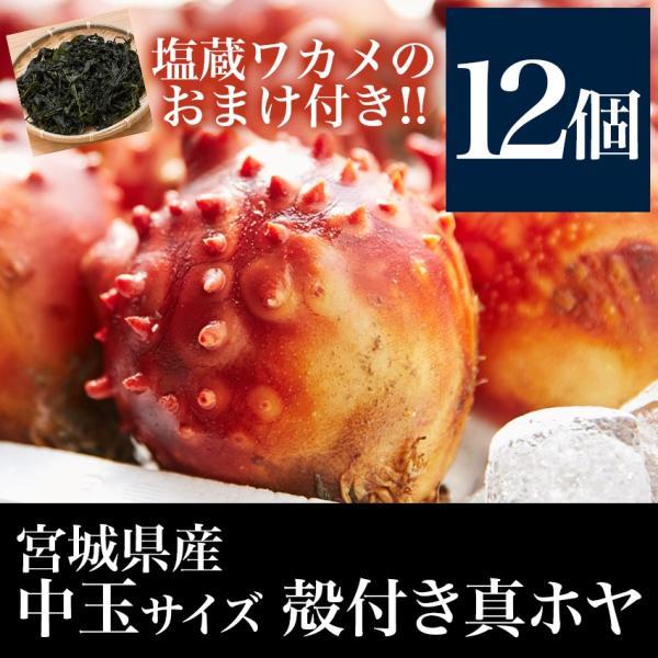 殻付きホヤ(中玉12個+塩蔵ワカメのおまけ付き)宮城県産 殻の剥き方ガイド付き!お刺身 天ぷらなどに|otr-ishinomaki