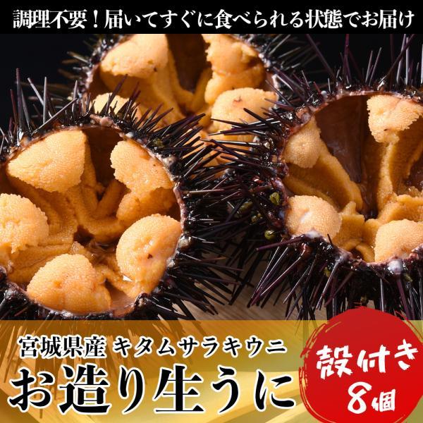 【送料無料】お造り生うに(6個〜8個/殻付き大サイズ)冷蔵 ◯|otr-ishinomaki