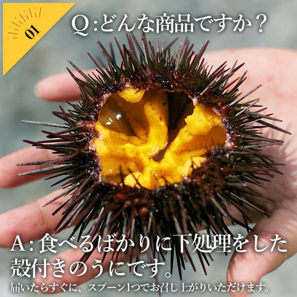 【送料無料】お造り生うに(6個〜8個/殻付き大サイズ)冷蔵 ◯|otr-ishinomaki|03