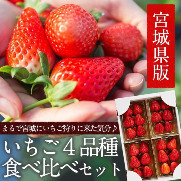 たっぷり約1kg!宮城県産いちご4品種食べ比べセット(大粒/レギュラーパック)冷蔵|otr-ishinomaki