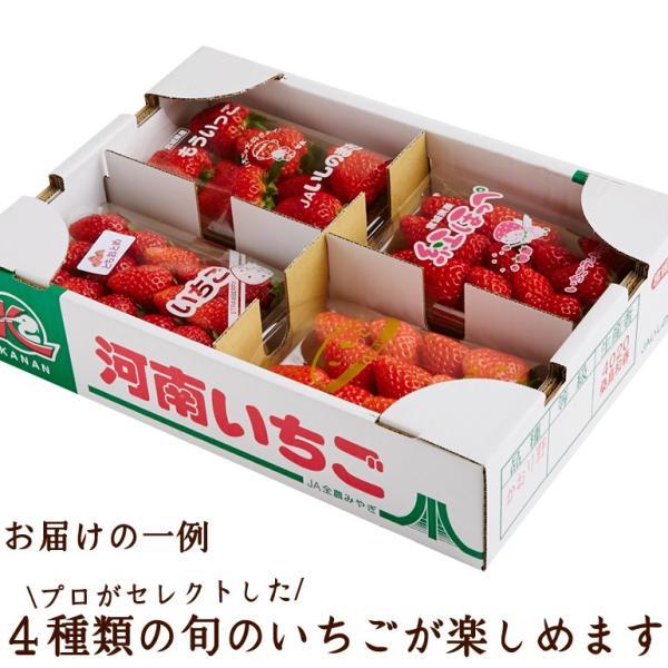たっぷり約1kg!宮城県産いちご4品種食べ比べセット(大粒/レギュラーパック)冷蔵|otr-ishinomaki|02